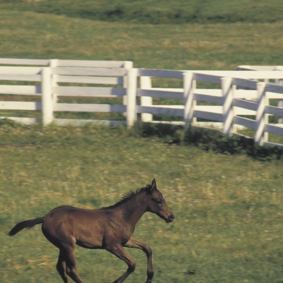 Lexington, known for its thoroughbreds, is the second-largest city in Kentucky.