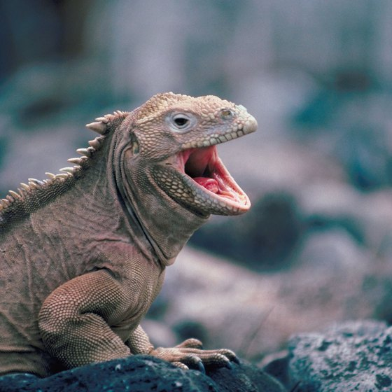 Inquisitive children will delight in the wildlife of the Galapagos Islands.