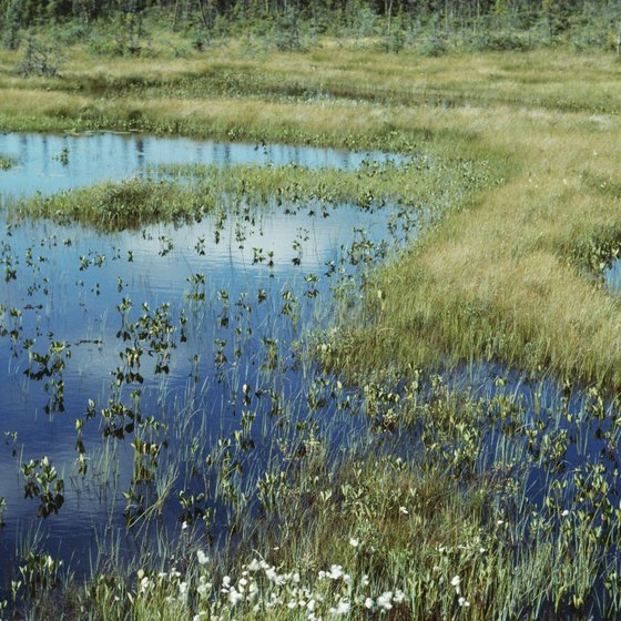 Photosynthesis 24 hours a day enables tundra plants to live an annual life cycle in two months.
