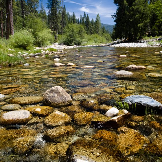 Discover clear water streams in Yosemite National Park.