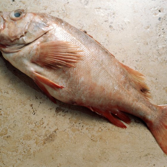 Redfish is one of several types of fish you might spot while snorkeling near Port Lavaca.