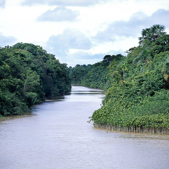 The Amazon River winds through the heart of the lush rain forest.