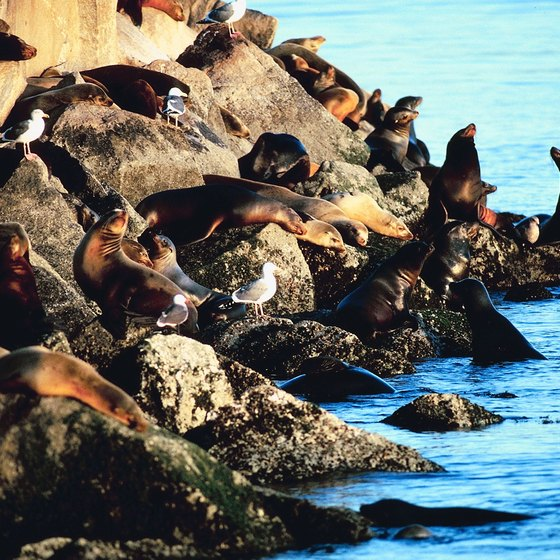 Some of the noisier residents of Monterey Bay