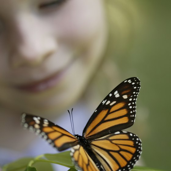 Kids can view butterflies at a local festival.