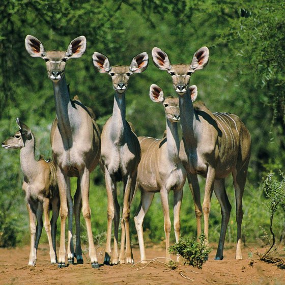 Kruger National Park is a major attraction for South African group tours.