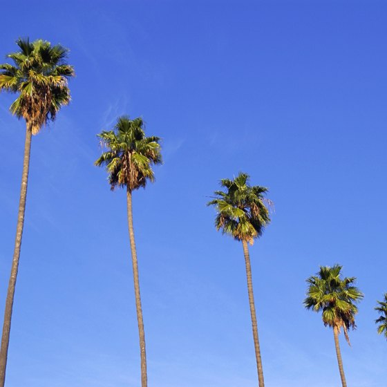 Head to the sunny skies of Los Angeles.