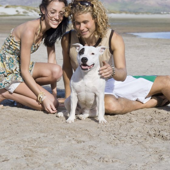 Virginia Beach warns visitors that light-colored dogs can get sunburned too.