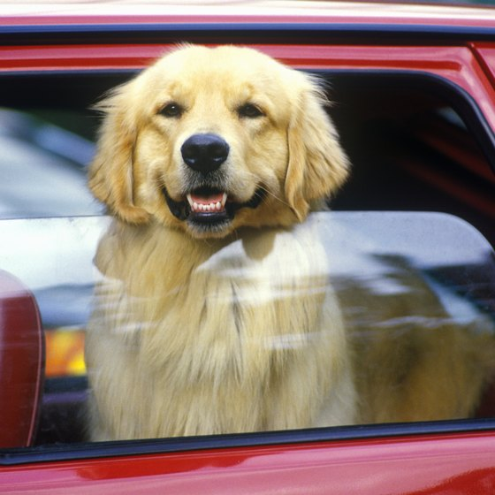 Traveling with your pet can be trouble-free.