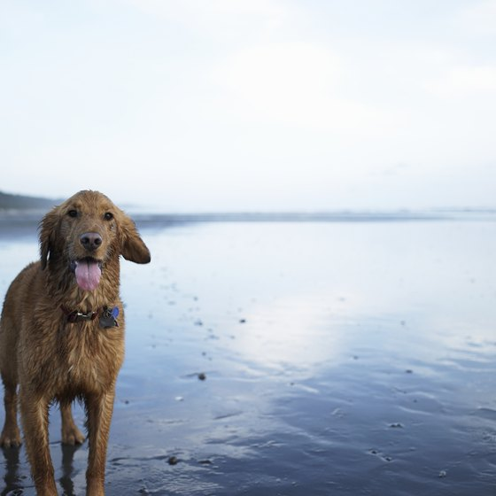 Bring along your best friend to Whidbey Island.