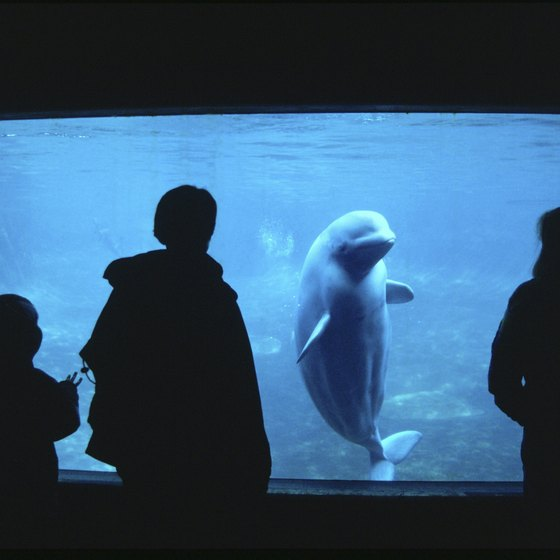 Visit an indoor aquarium in Southern California.