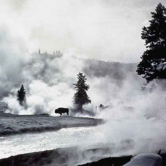 Steam, snow and buffalo characterize Yellowstone's winter scenery.