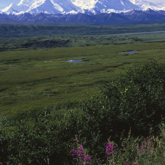 Many escorted land tours include a visit to Denali National Park.