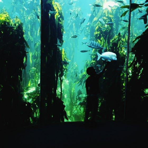 Aquariums Nearest To Oshkosh Wisconsin Usa Today