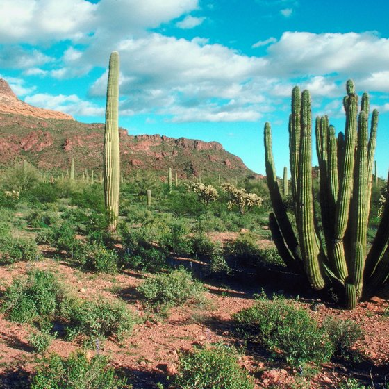 The breathtaking beauty of the Sonoran Desert surrounds Scottsdale.