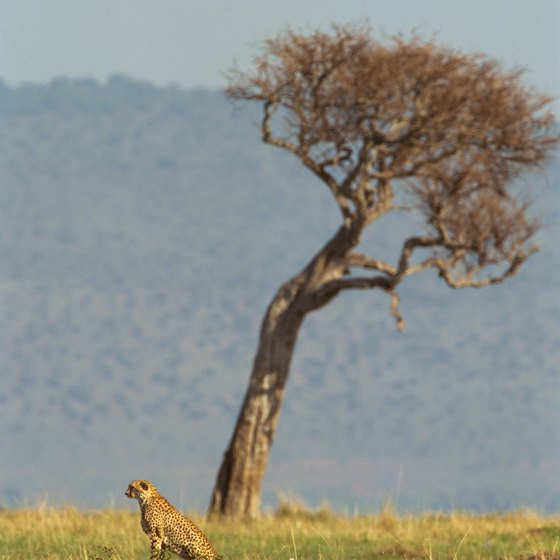 Tourists often come to Kenya to view its stunning landscapes and wildlife.