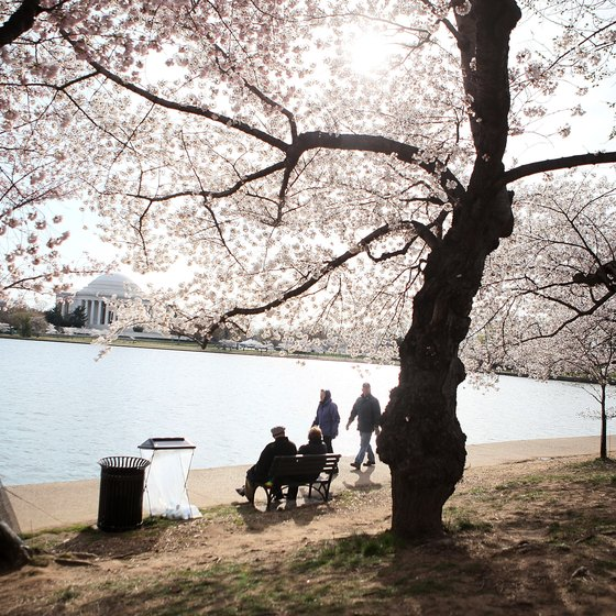 The Cherry Blossom Festival makes Washington a popular destination each April.