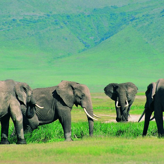 Go on safari in one of Tanzania's national wildlife parks.