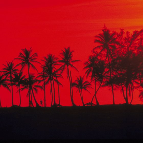 Palm trees are silhouetted against a blood red Bahamian sunset.