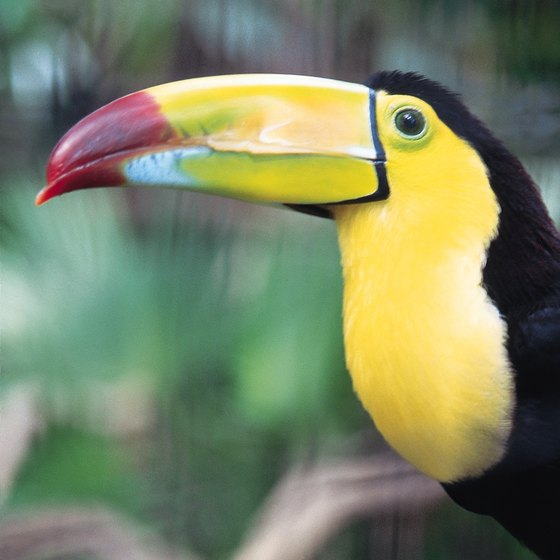 Many travelers come to Belize for birdwatching; a hostel makes the trip more affordable.