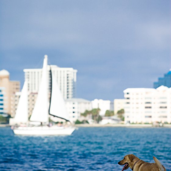 Finding a cruise line that accepts dogs can be a challenge.