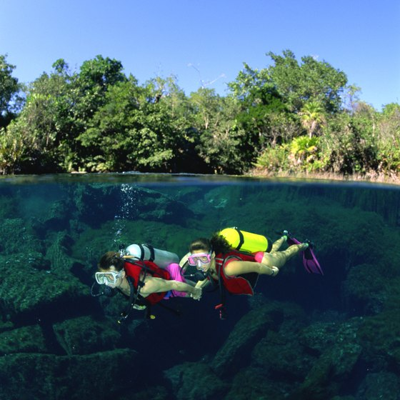 Ocala National Forest is a venue for Florida springs diving.