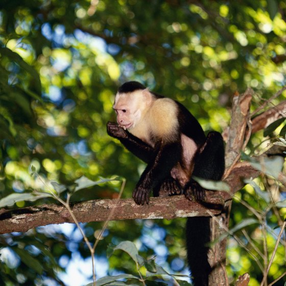 The area around Quepos, Costa Rica, teems with wildlife.