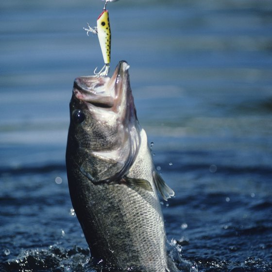 In addition to swimming, many Kentucky lakes feature largemouth bass fishing.