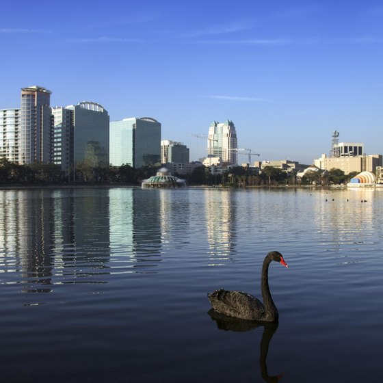 A black swan on Lake Eola with the Orlando skyline in the background.