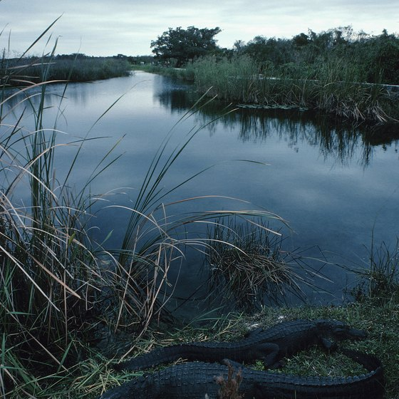 Visitors to the Miami area can camp in the Everglades.