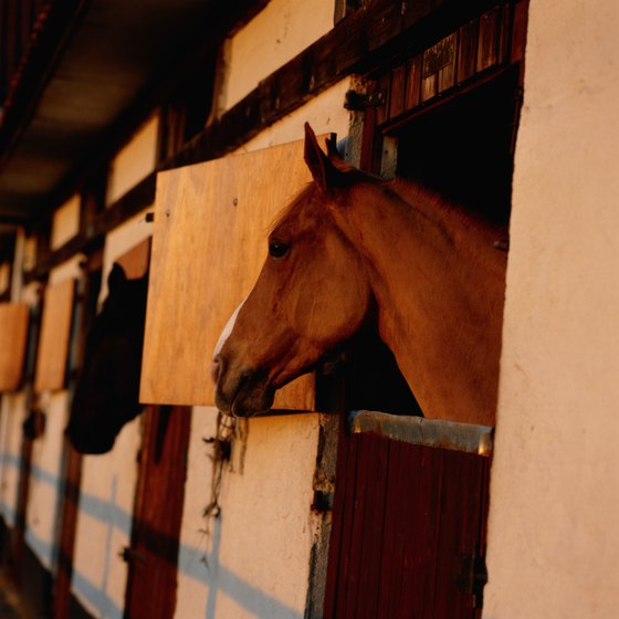Visit a Niagara County horseback riding stable.