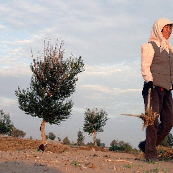 The Chinese government is working to reforest the edges of the Gobi desert to prevent its spread into surrounding villages.