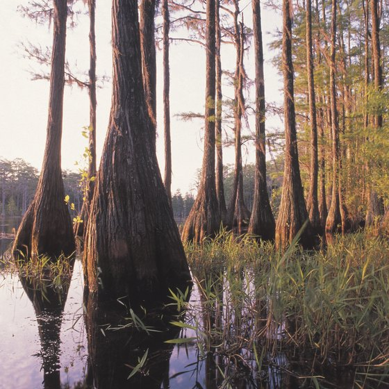 Get off the beaten path in south Louisiana.