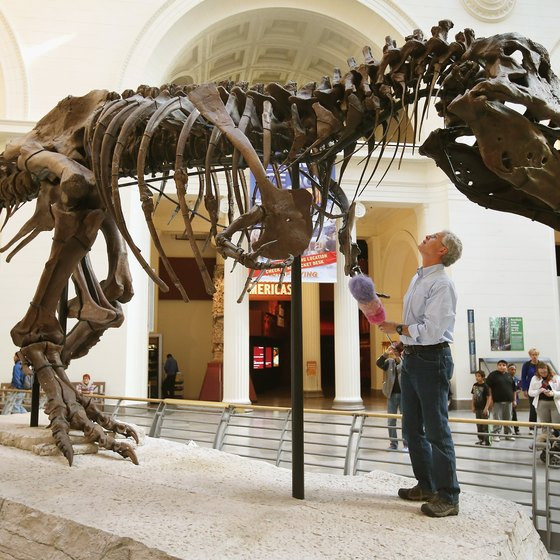 Meet Sue, the Field Museum's record-breaking T. rex.