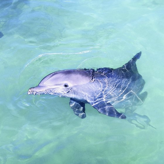 The Aqualand park offers swims with bottlenose dolphins.