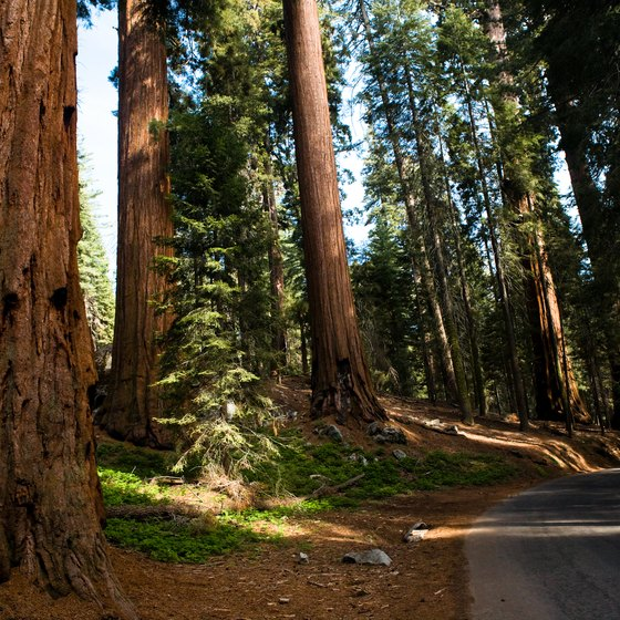 The giant sequoias are less than 300 miles north of LA.