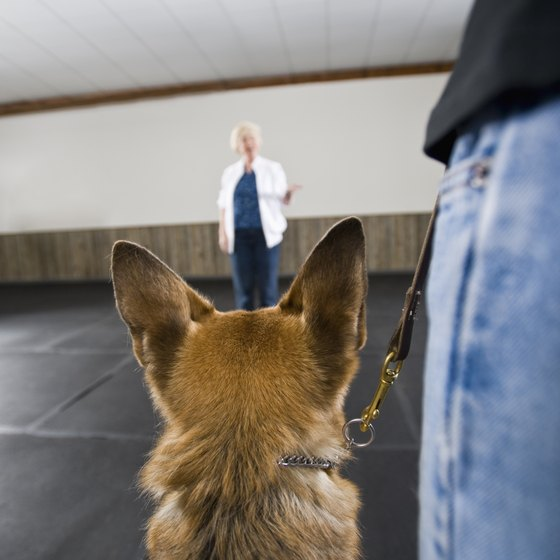 A trained service dog can help you travel comfortably and safely.