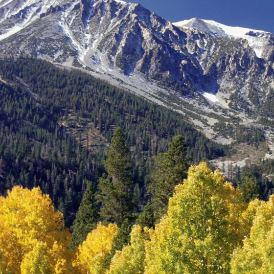 In California's Sierra Nevada, mountain peaks rise above trees at Inyo National Forest.