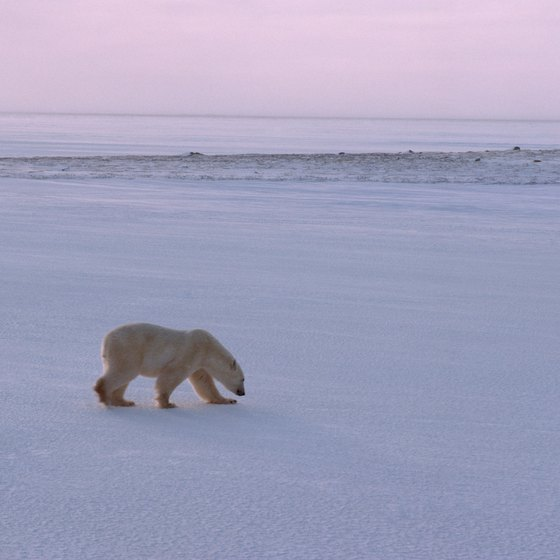 Polar bears are just some of the dangers when traveling to the North Pole.
