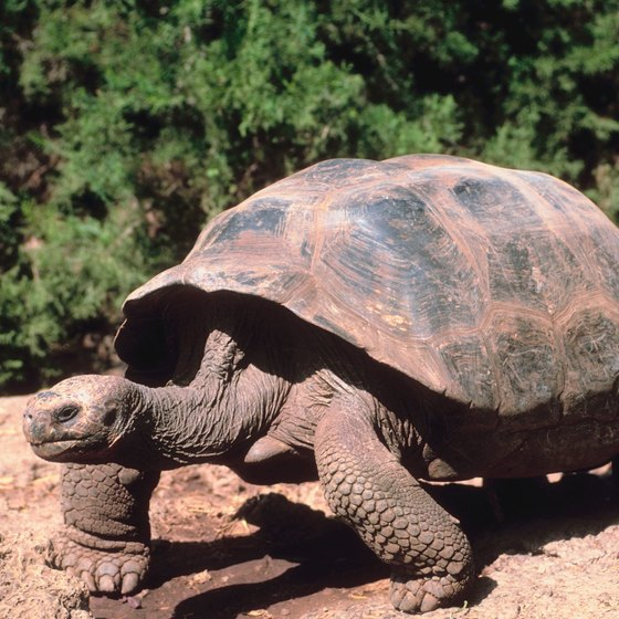 An educational cruise to the Galapagos Islands includes sightings of giant tortoises..