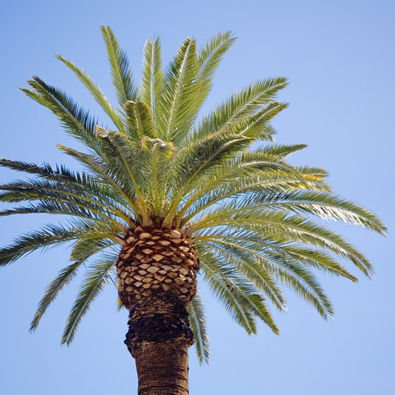 Relax under the shade of a palm tree at Keystone Beach.