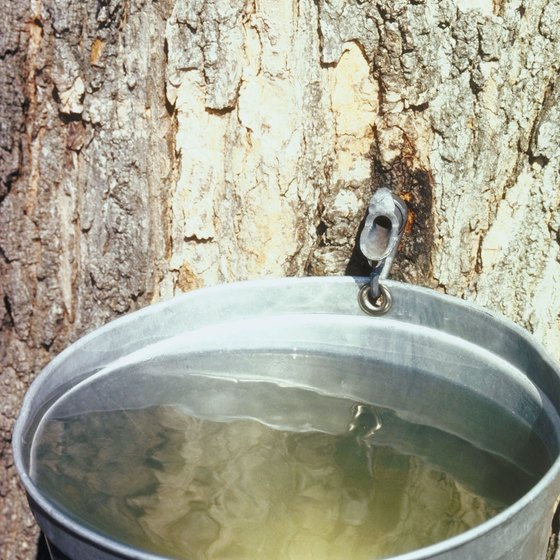 New Hampshire celebrates its mainstay, maple syrup, every spring.