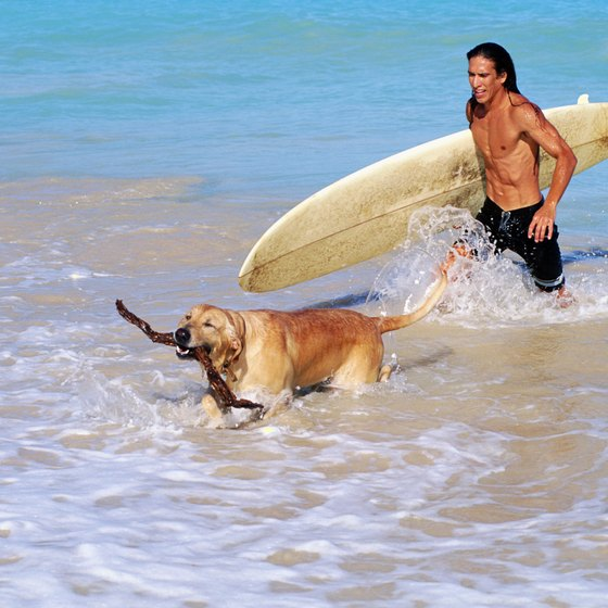 South Florida offers dog-friendly beach bliss for dogs and their owners.