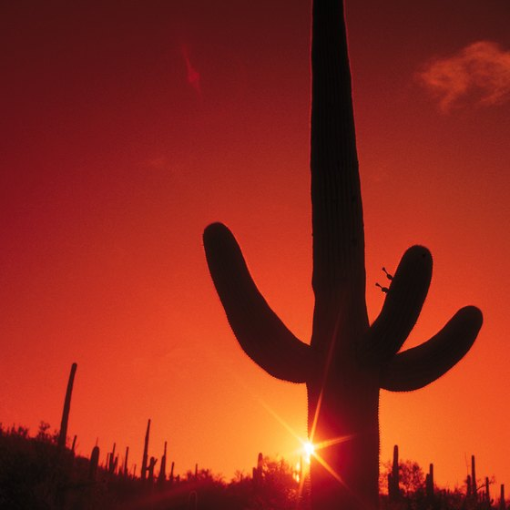Enjoy a sunset in the Arizona desert.