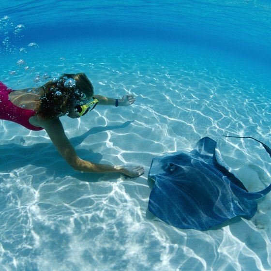 A swimmer interacts with a stingray in the Cayman Islands