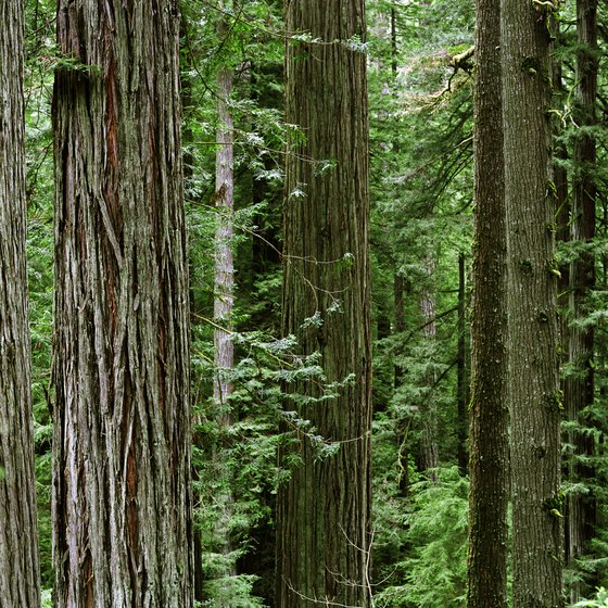 Redwood forests are found along the coast in northern California.
