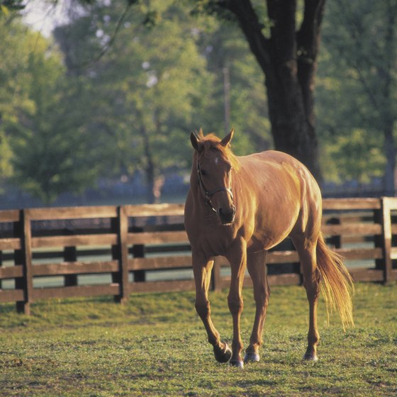 Kentucky-based horse activities often take place on open farmland or wooded regions.