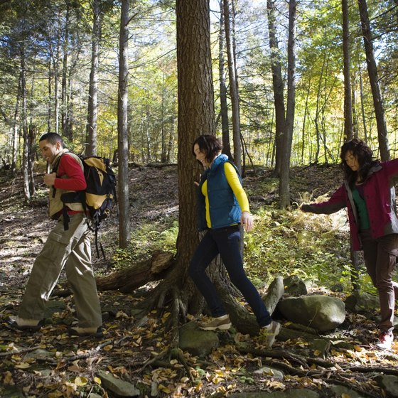 Enjoy a walk along one of the designated hiking trails in Manchester, Connecticut.