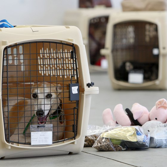 Your dog will appreciate being familiarized with its crate before traveling.