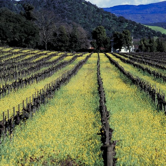 St. Helena is in the heart of California's Napa Valley.