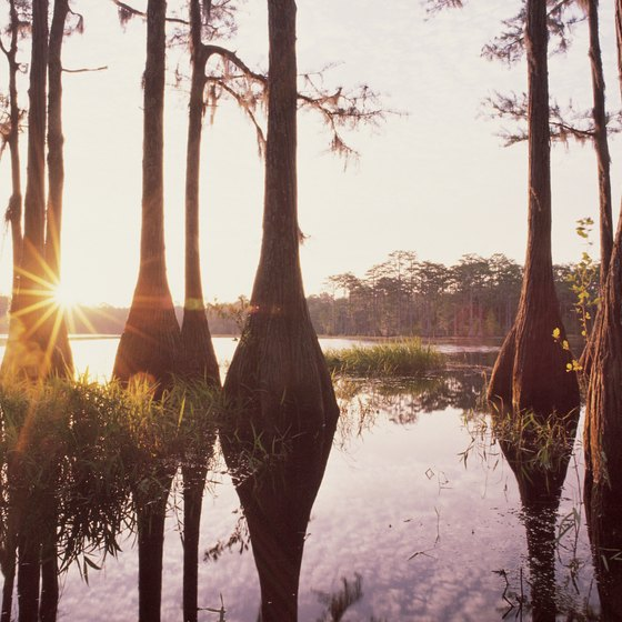 Access the backcountry swamps of Big Cypress National Preserve with your ATV.